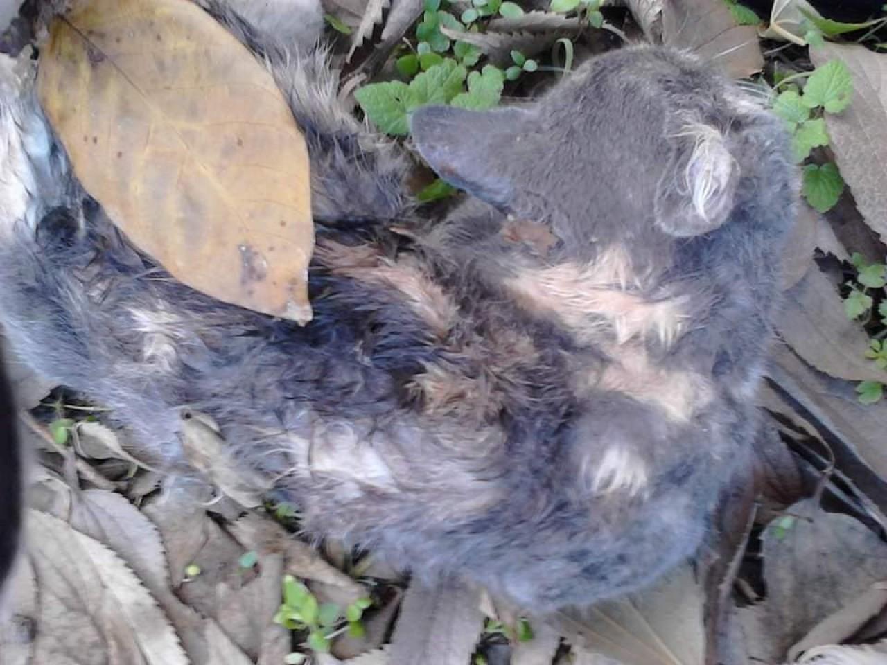 Резултат с изображение за Сериен убиец на котки уби над 100 само за месец в Бургас